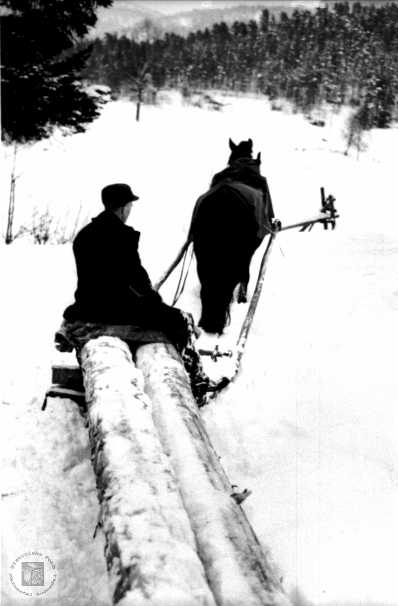 Skogsarbeid med hest og stupsslede Bjelland.
