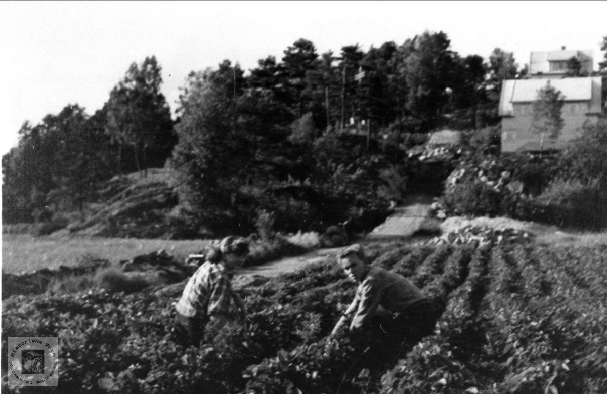 Gårds nr 81,  Før bebyggelse, Øyslebø.