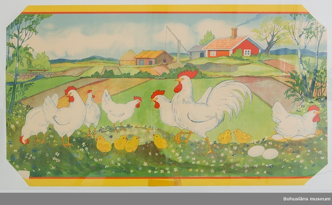 Hörnena bortklippta. Lagad med tejp.  Motiv: Hönor och kycklingar på bondgård. För upplysningar om ägarna, Gunnar och Greta Karlsson, se UM018527 Gåvan omfattar UM024884 - UM024915