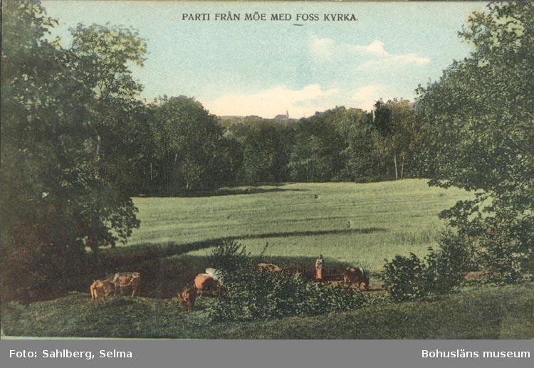 """Tryckt text på kortet: """"PARTI FRÅN MÖE MED FOSS KYRKA"""". """"F. L. Schewenius förlag Munkedal""""."""