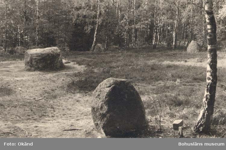 """Noterat på kortet: """"Blomsholm, Skee Sn. Vette. 22 Sept. 1955"""" """"Domarringen."""""""
