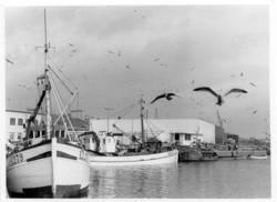 LL279 SLÄGGÖ av Lysekil lossar i fiskhamnen