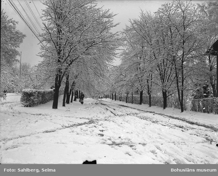 """Enligt fotografens noteringar: """"Snö i Munkedal i allén vid Tången."""""""