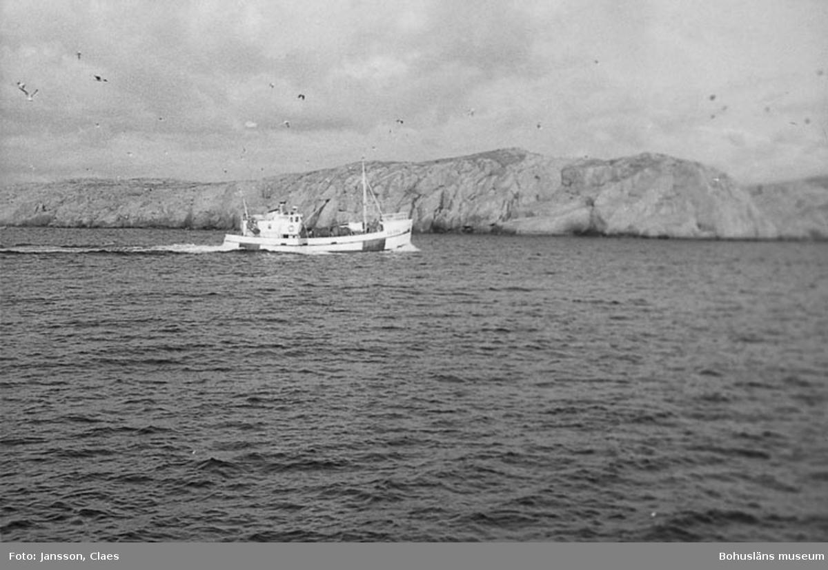 Havskräftfiske 1994.