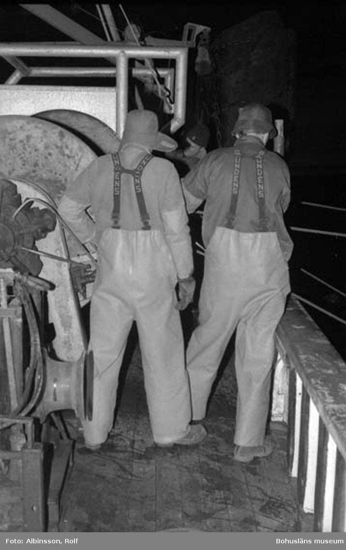 """Enligt fotografens noteringar: """"Från vänster Harald Hansson, Erling Larsson och Bengt Persson spinner på sveplinorna.""""  Fototid: 1996-03-06."""