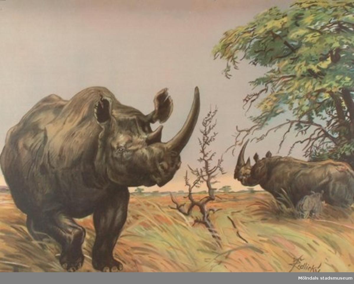 Biologi.Noshörning.