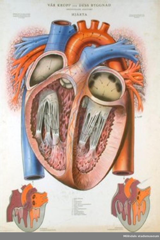 Biologi.Hjärta.Vår kropp och dess byggnad.Ivar Haggströms boktryckeri A-B.