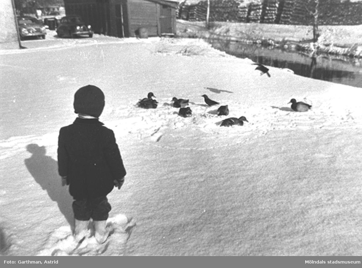 Jerry Garthman står och tittar på änder vid Mölndalsån. På andra sidan ligger Papyrus vedupplag. Till vänster står en Borgward Isabella och en Saab 93:a. Slutet av 1950-talet.