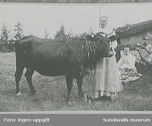Kvinna med ko.