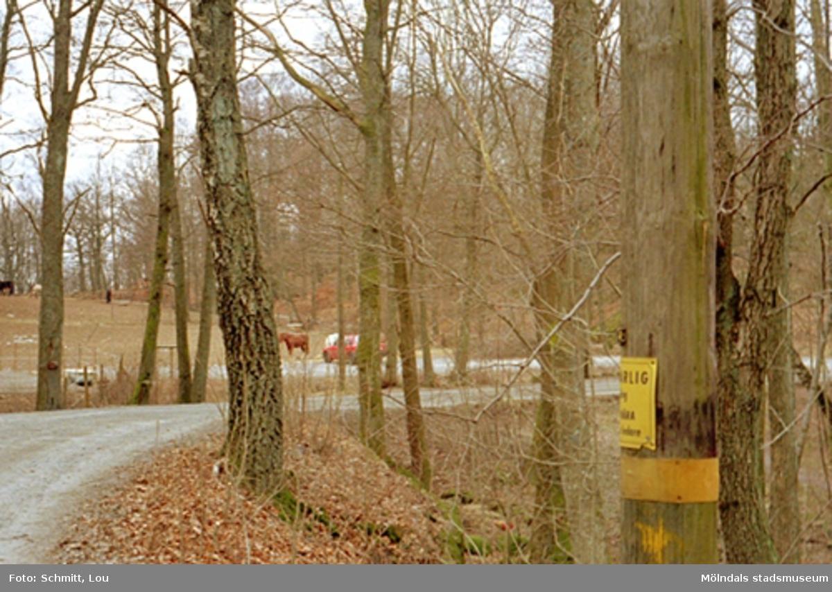 En grusväg kantad av höga träd som leder till Gunnebo slott. Till vänster om vägen ser man hästar i en hage samt en parkerad bil.