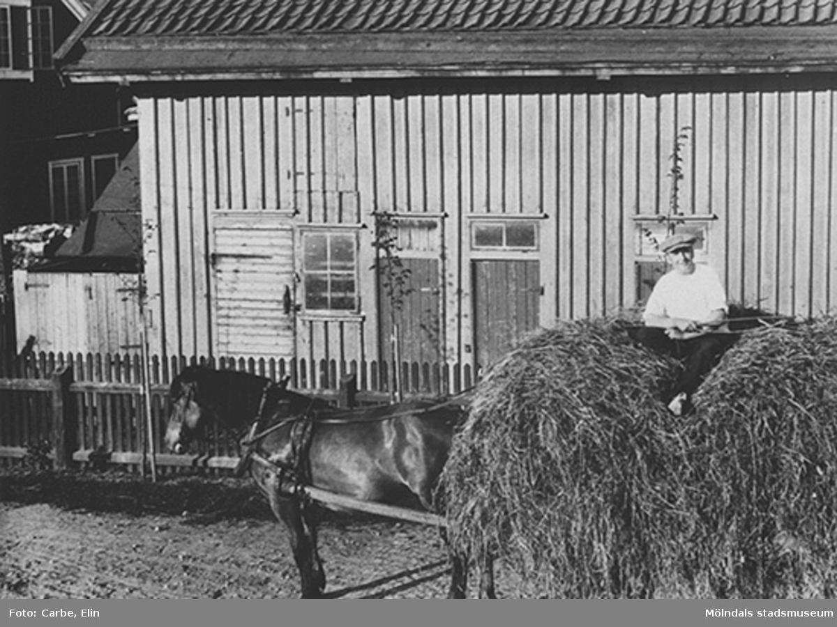 """Höbärgning i trädgården norr om huset """"Westanå"""", cirka 1920."""