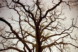Träd på Ekekullen.