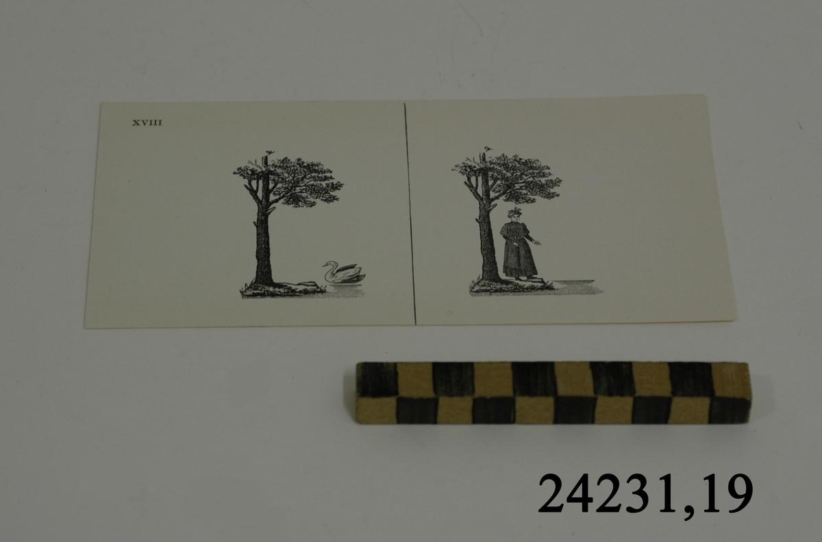 Rektangulärt vitt pappersark numrerat XVIII i övre vänstra hörnet. På arket syns två stycken olika bilder i svartvitt, en för vardera öga. Till vänster: Ett träd vid strandkant, i vattnet simmar en svan. Till höger: Ett träd vid strandkant, under grenverket står en kvinna.