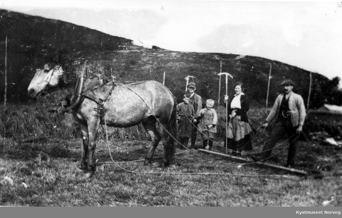 Høyonn med hestrive i bruk