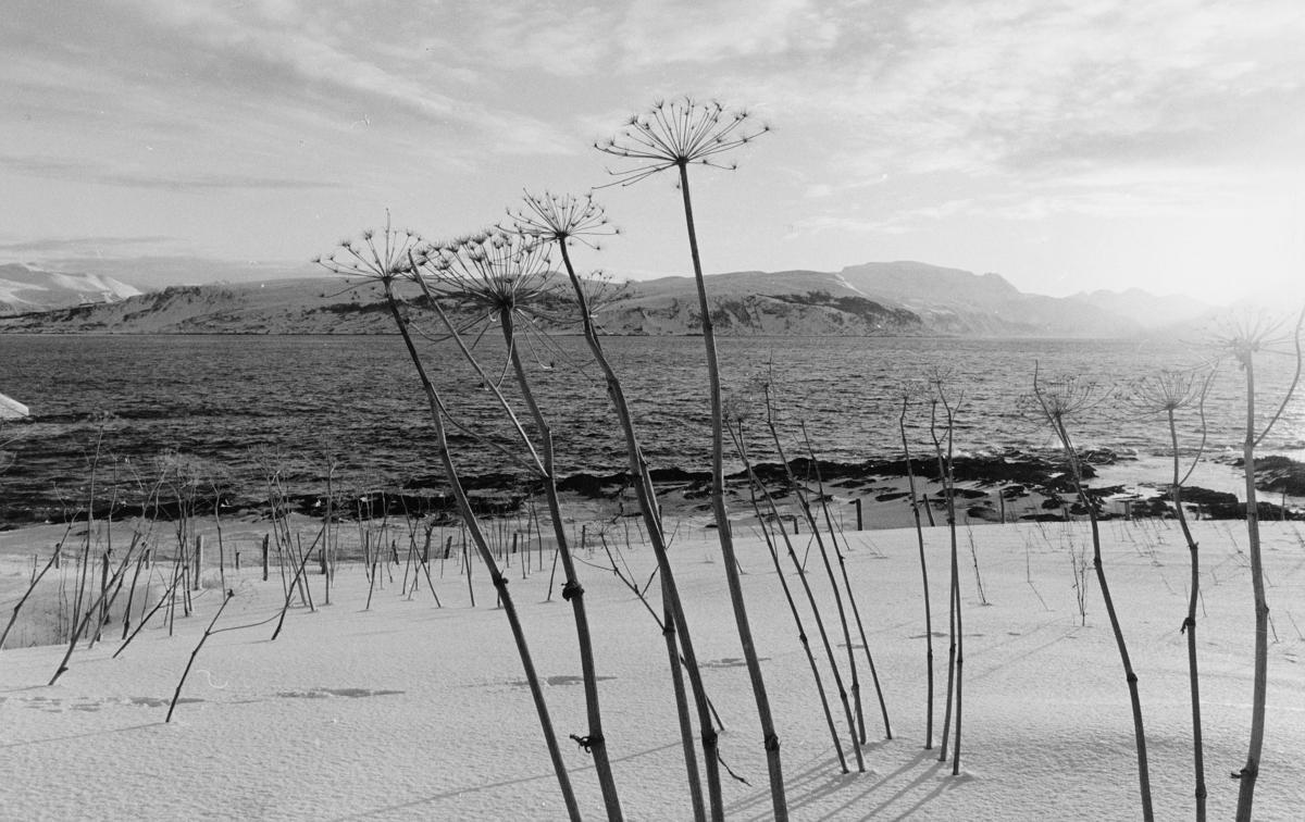 norgesbilder, i Nord, hav,snø