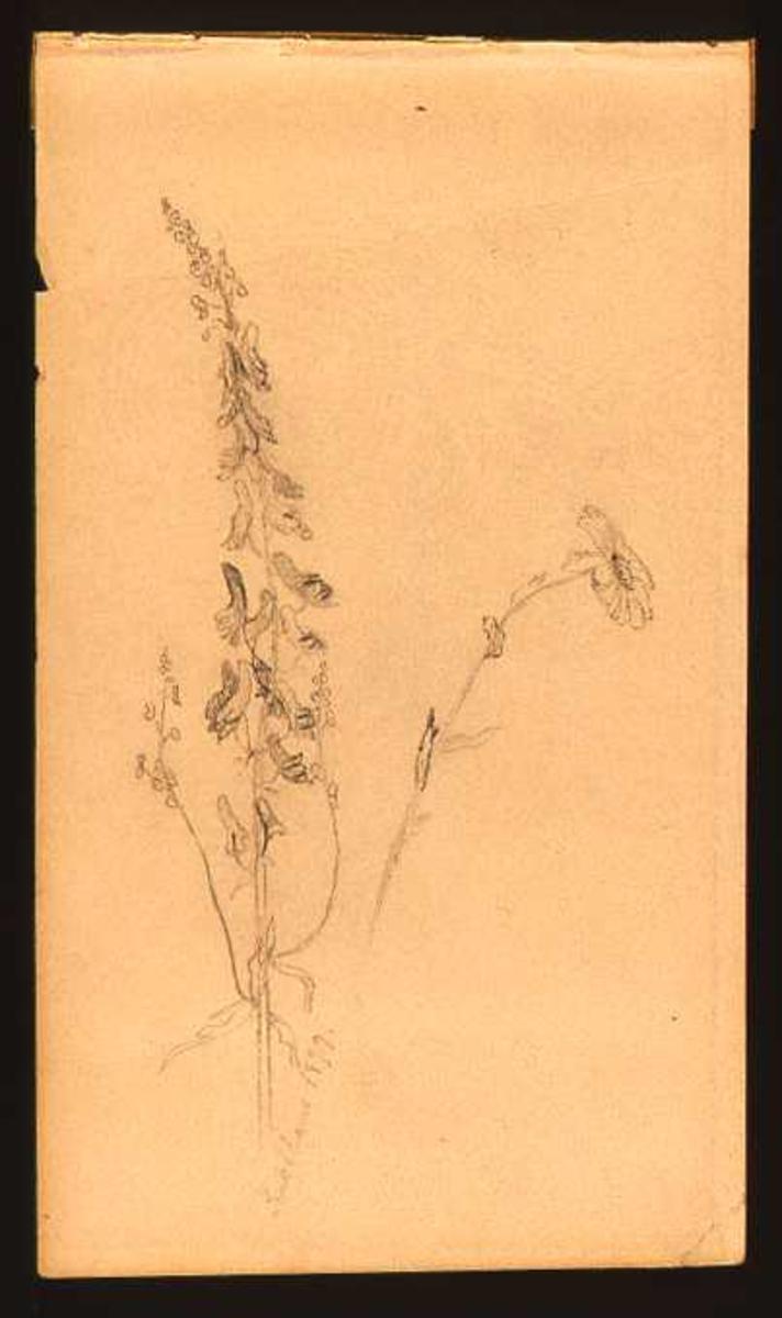 Skisse av blomster