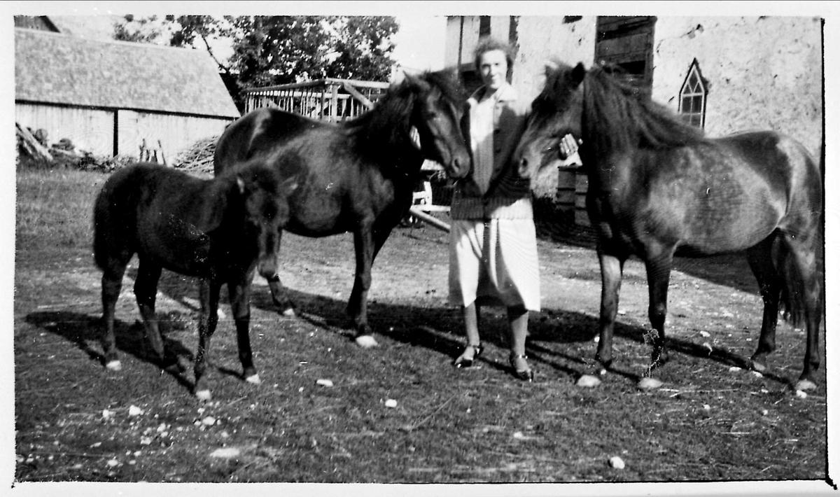Hest, kvinne