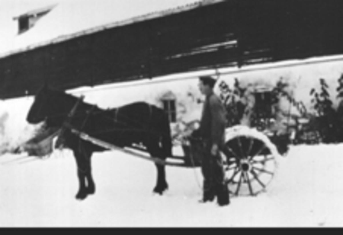 Petter Lundstrøm kjører kålrot med hest og stuttkjerre vinterstid på Mellem Kise, Nes, Hedmark. Låven er bygd i 1857 av Nils og Agnethe Gjestvang, . Stallen var selvmurt, omgjort til potetkjeller.