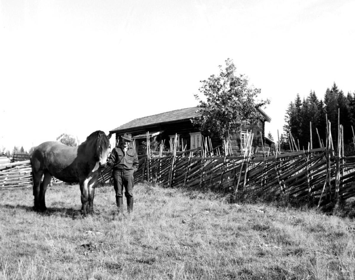 Nysetra, en mann med hest