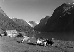 Loenvann. Nordfjord