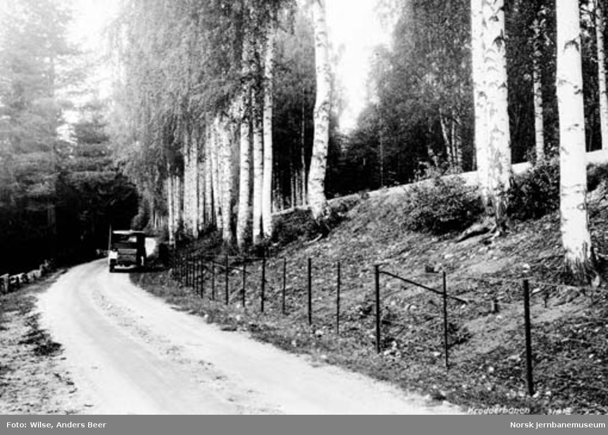 Krøderbanen ved bjørkealléen ved Snarum