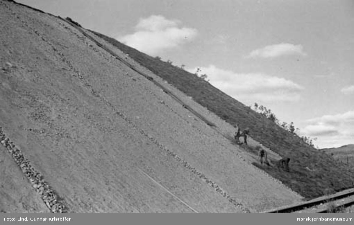 Nordlandsbaneanlegget : bearbeielse av skråninger i skjæring ved Randalsvoll